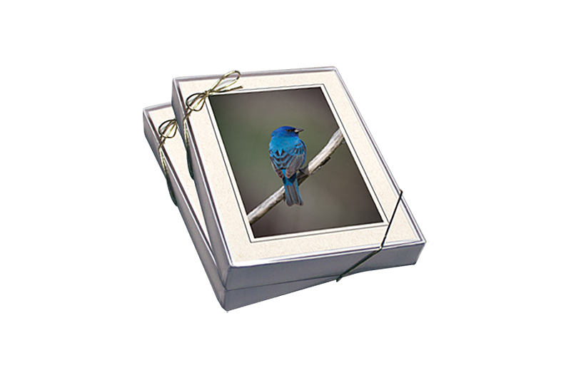 Feathered Nest Photography Gift Boxes