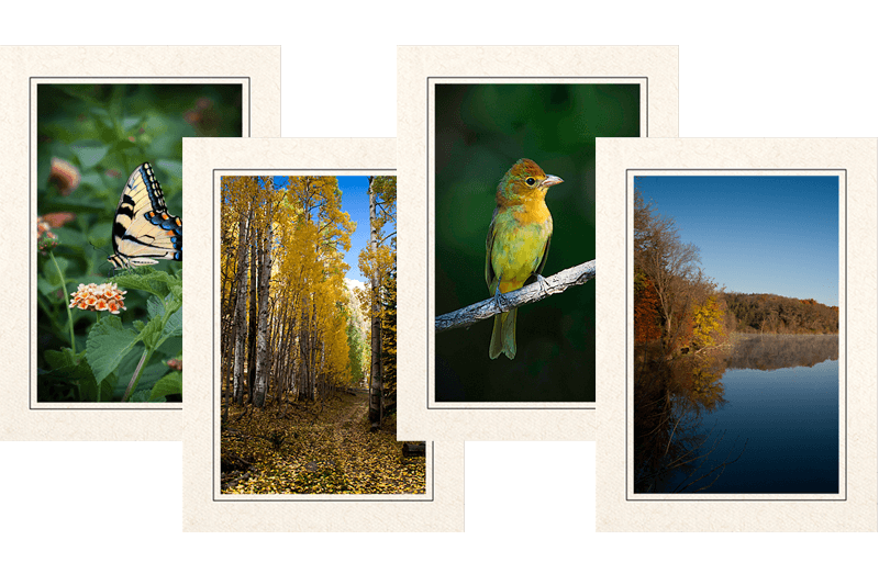 Feathered Nest Photography Note Cards