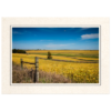 Iowa Bean Field